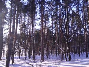 Зимний лес. Фотограф Рустам Салямов
