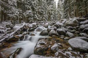 Первый снег. Тебердинсккий заповедник, ручей между Тебердой и Домбаем. Фотограф: Арсен Алабердов