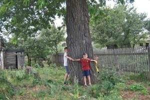 Дуб - родовое древо. Фотограф: Ярослав Хунафин
