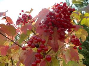 Осень в Подмосковье. Фотограф Алсу Буш