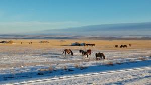 Зимняя степь. Фотограф: Альфия Хунафина